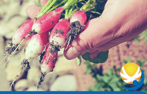 OPERATORE AGRICOLO: COLTIVAZIONI ARBOREE, ERBACEE, ORTOFLORICOLE