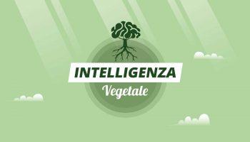 Intelligenza Vegetale - Ponte di Legno 34